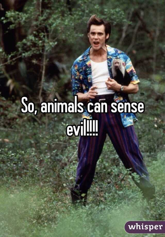 So, animals can sense evil!!!!