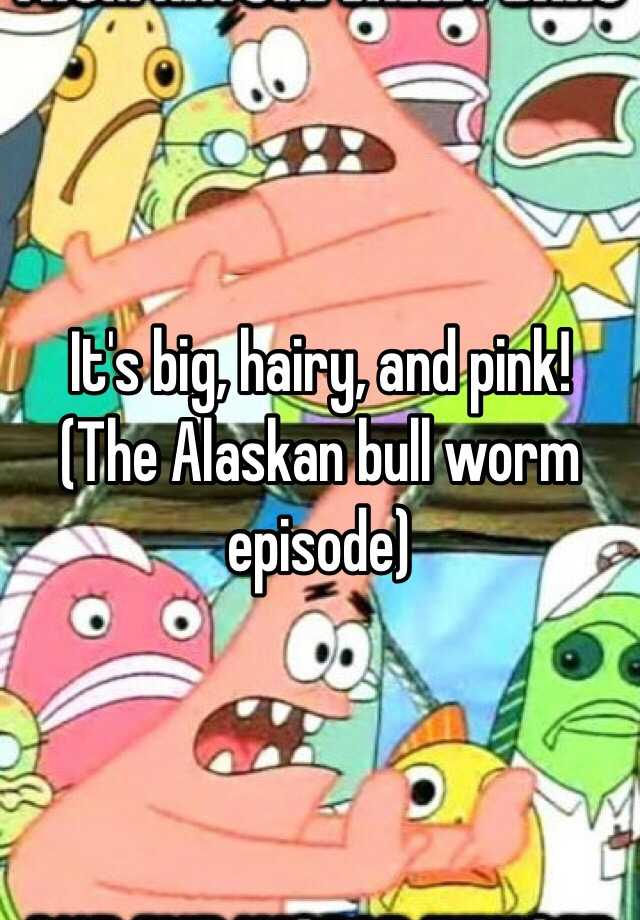 It's big, hairy, and pink! (The Alaskan bull worm episode)