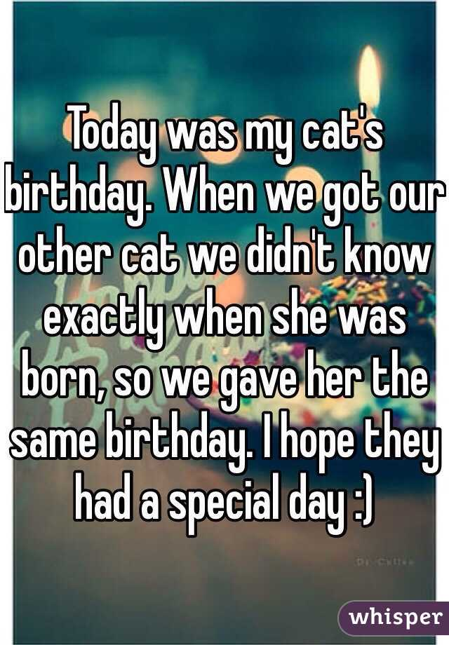 Today Cat Today Was my Cat's Birthday