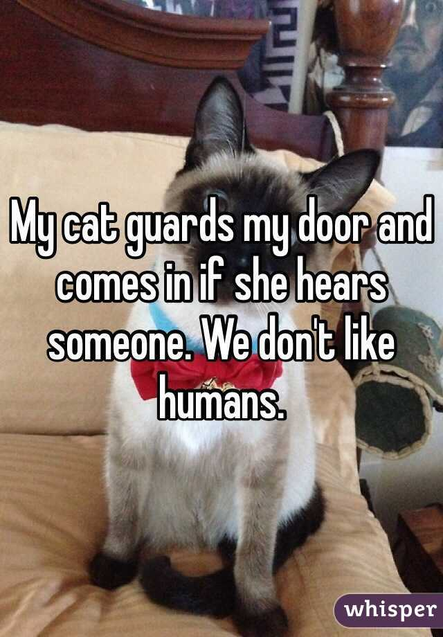Cat Guards me my Cat Guards my Door And