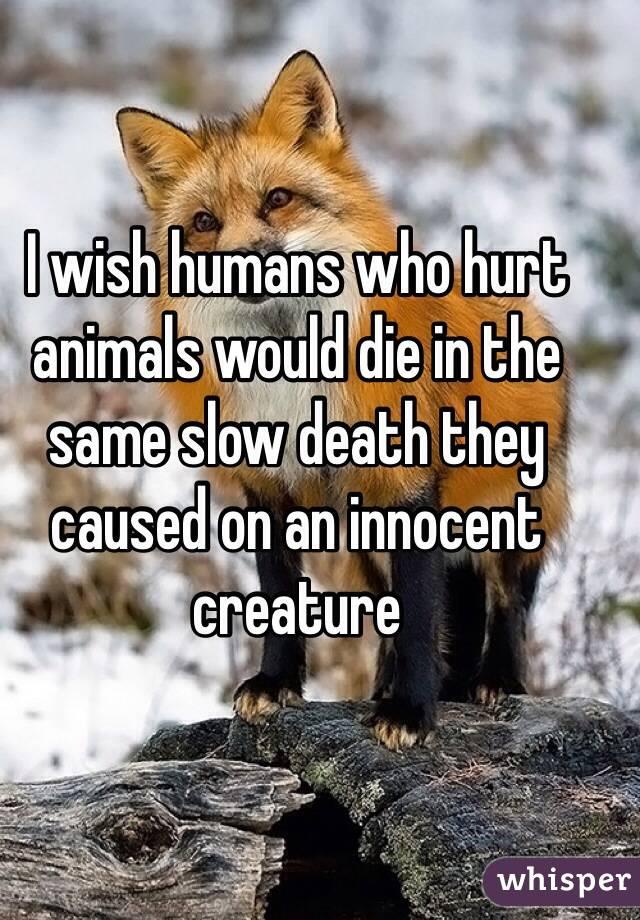I wish humans who hurt animals would die in the same slow death they caused on an innocent creature