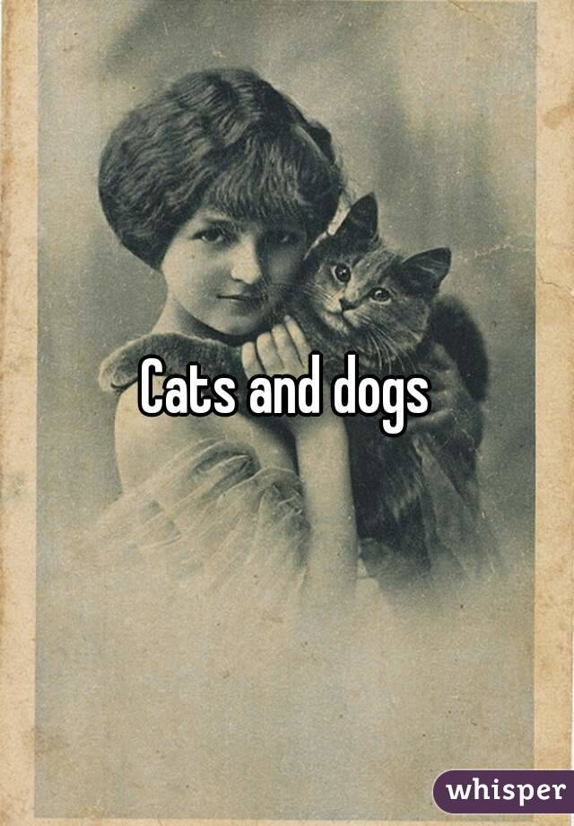 Is It True Dogs And Cats Can See Ghosts