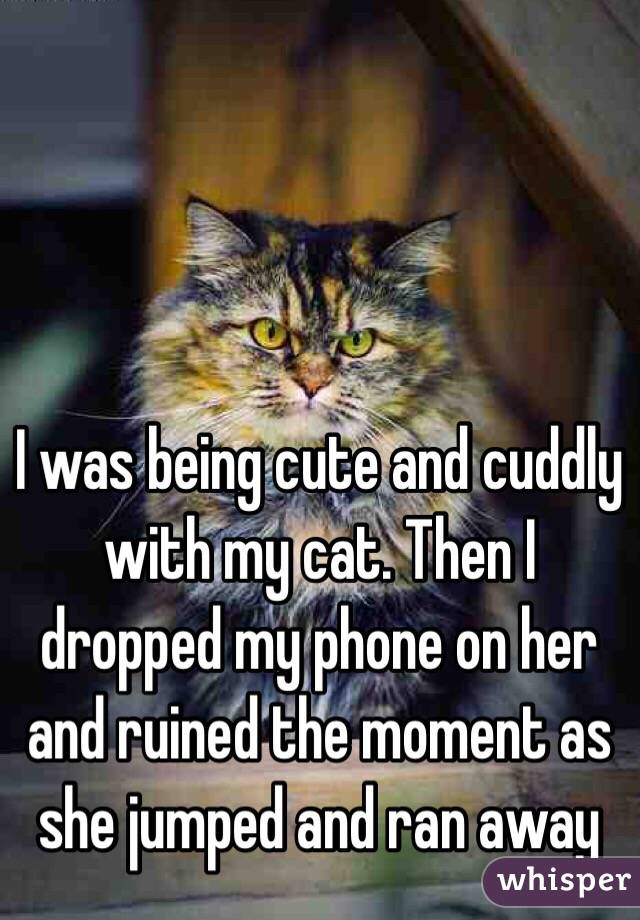 I was being cute and cuddly with my cat. Then I dropped my phone on her and ruined the moment as she jumped and ran away
