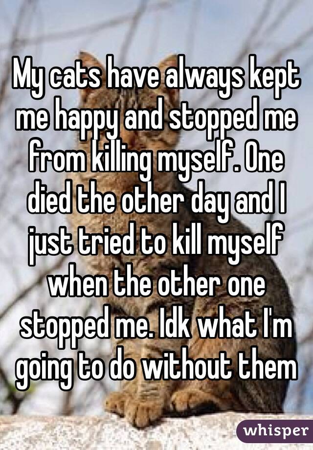 My cats have always kept me happy and stopped me from killing myself. One died the other day and I just tried to kill myself when the other one stopped me. Idk what I'm going to do without them