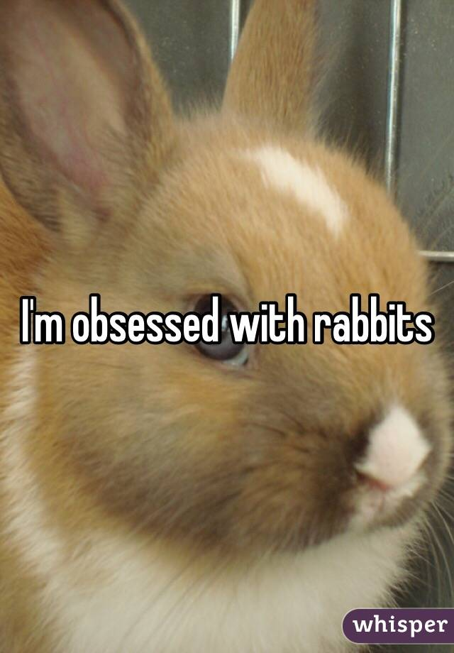 I'm obsessed with rabbits