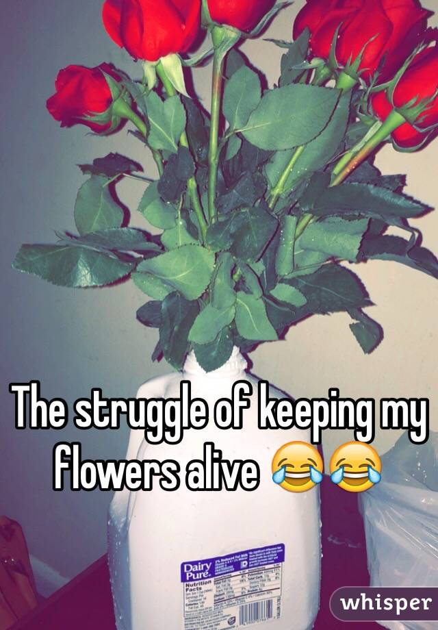 The struggle of keeping my flowers alive 😂😂