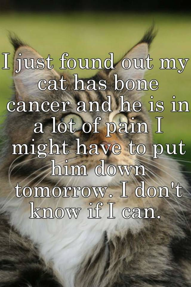 I Just Found Out My Cat Has Bone Cancer And He Is In A Lot Of Pain Might Have To Put Him Down Tomorrow Don T Know If Can
