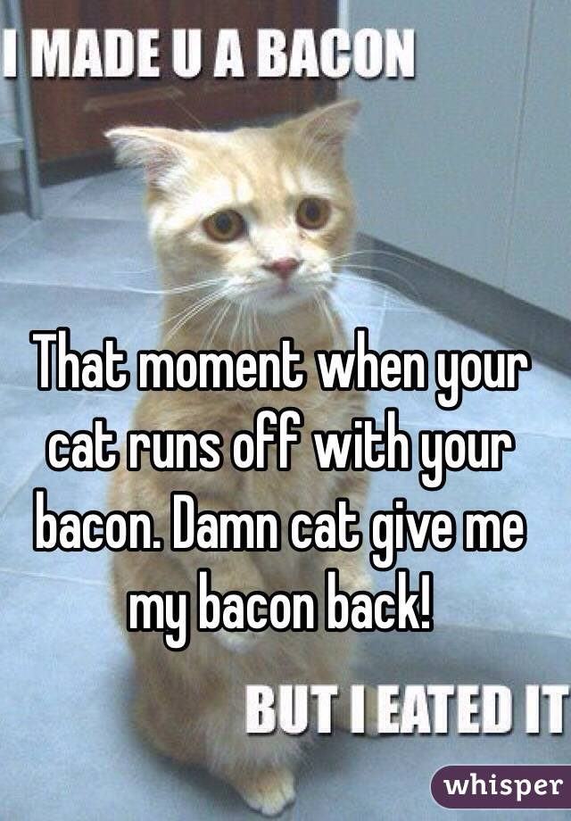 That moment when your cat runs off with your bacon. Damn cat give me my bacon back!