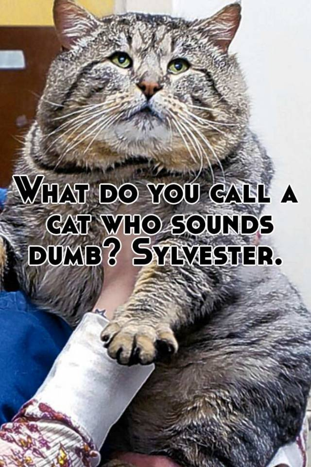 how to call a cat sound