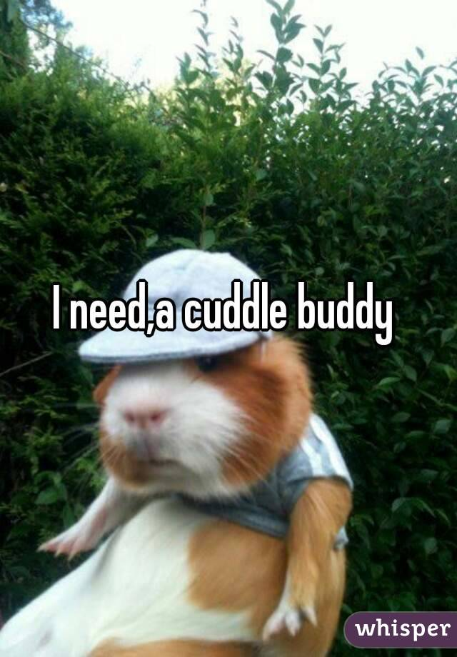 I need,a cuddle buddy