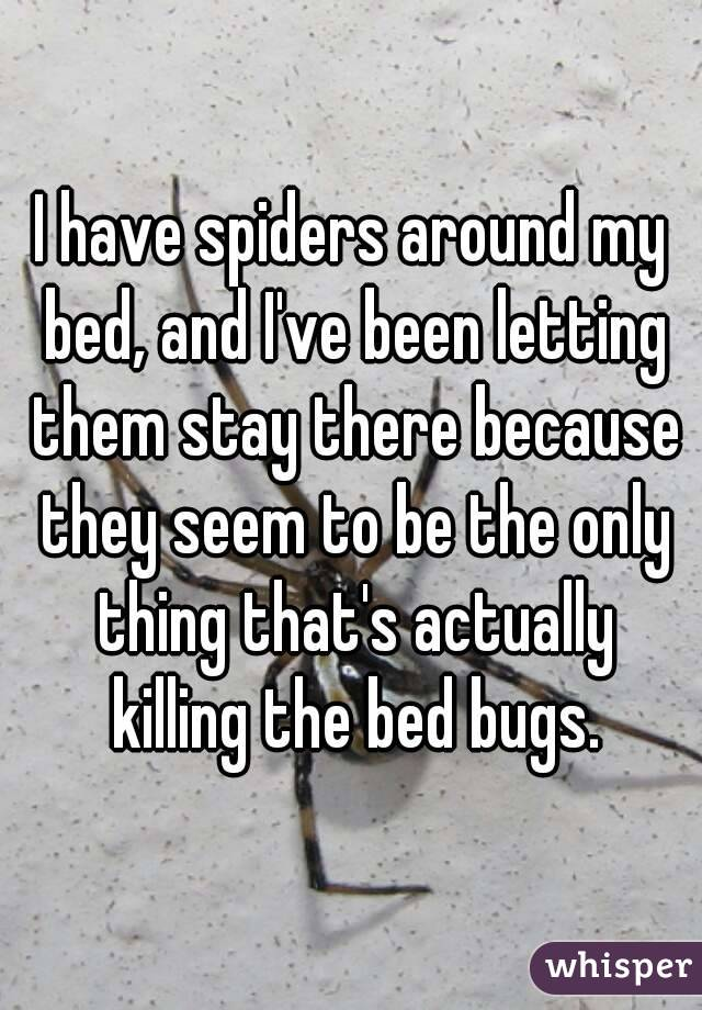 I have spiders around my bed, and I've been letting them stay there because they seem to be the only thing that's actually killing the bed bugs.