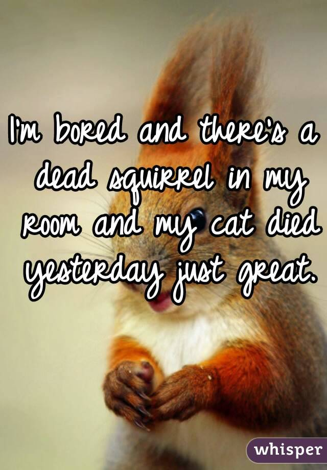 m bored and there\'s a dead squirrel in my room and my cat died ...