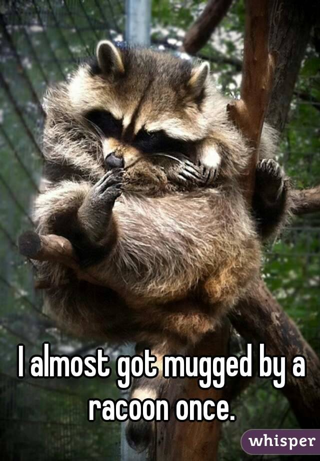 I almost got mugged by a racoon once.
