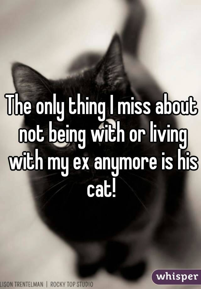 The only thing I miss about not being with or living with my ex anymore is his cat!