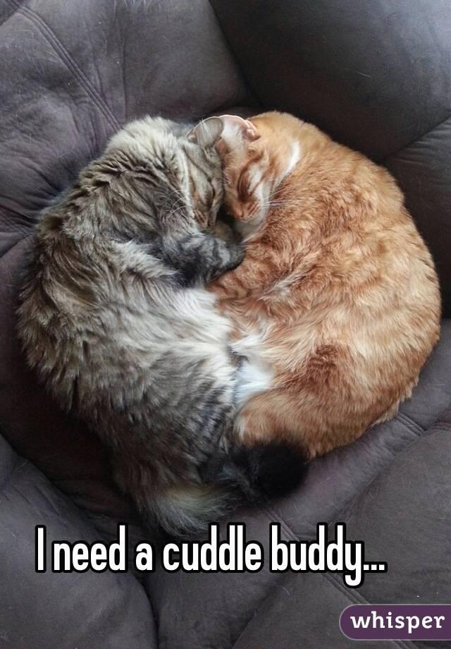 I need a cuddle buddy...