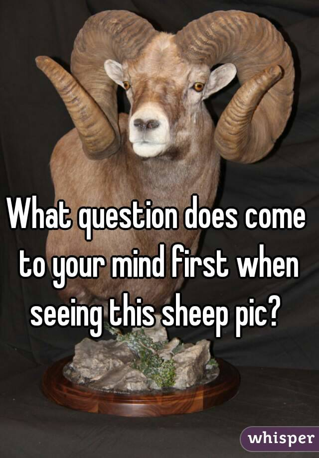 What question does come to your mind first when seeing this sheep pic?