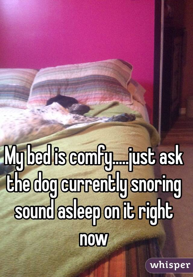 My bed is comfy.....just ask the dog currently snoring sound asleep on it right now