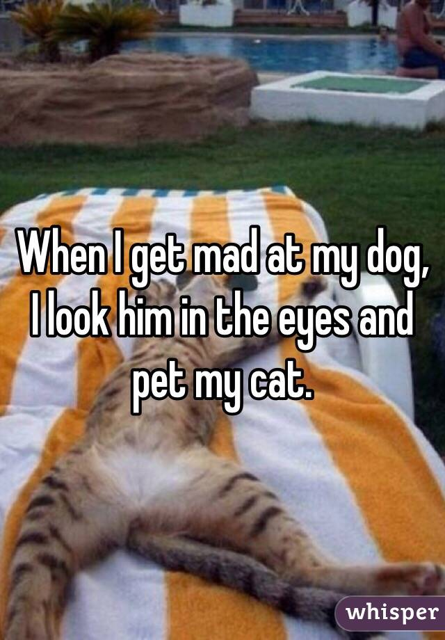When I get mad at my dog, I look him in the eyes and pet my cat.