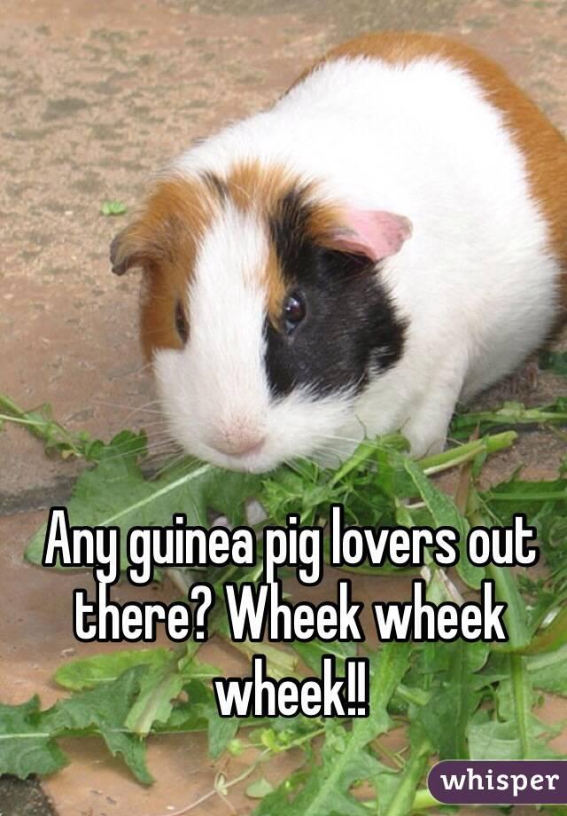 Any guinea pig lovers out there? Wheek wheek wheek!!