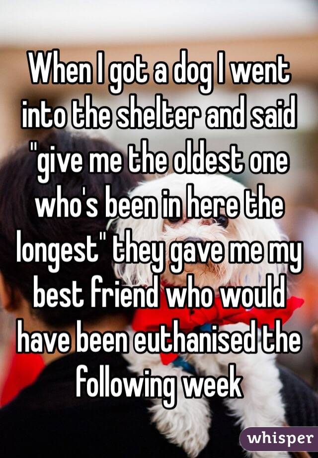 """When I got a dog I went into the shelter and said """"give me the oldest one who's been in here the longest"""" they gave me my best friend who would have been euthanised the following week"""