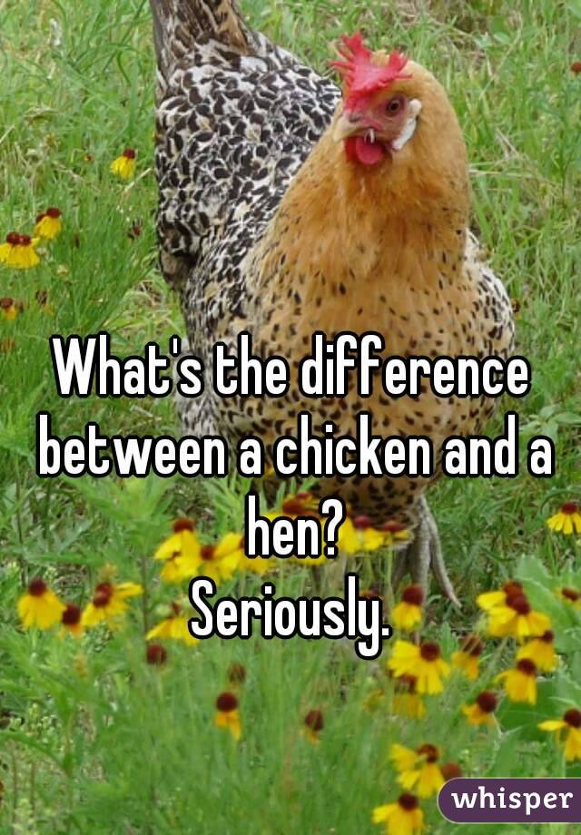 What's the difference between a chicken and a hen? Seriously.