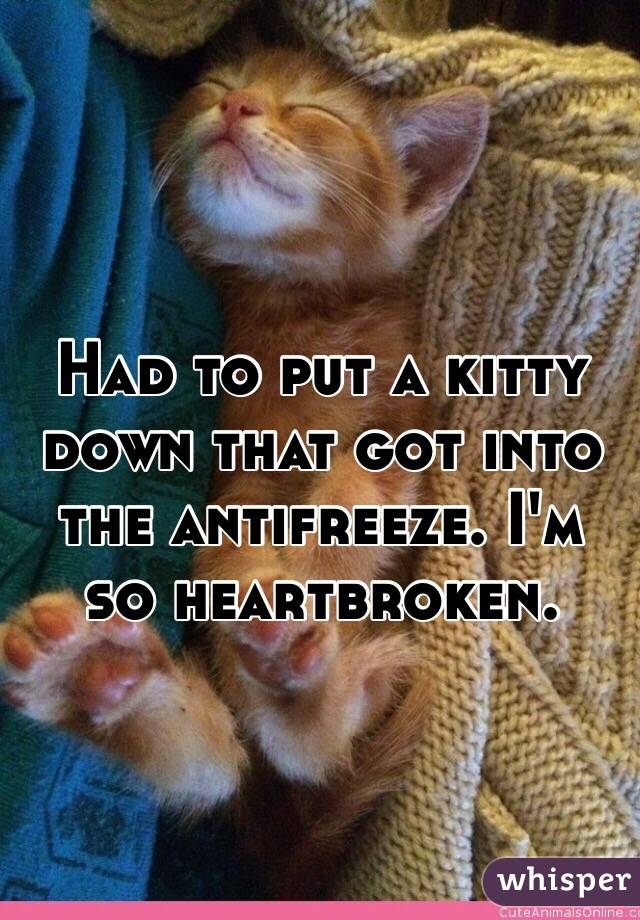 Had to put a kitty down that got into the antifreeze. I'm so heartbroken.