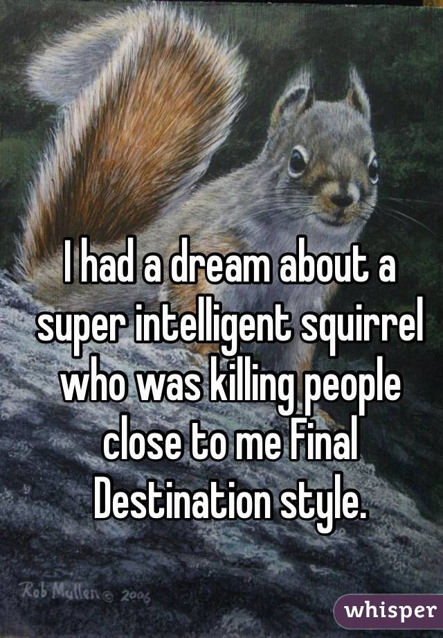 I had a dream about a super intelligent squirrel who was killing people close to me Final Destination style.