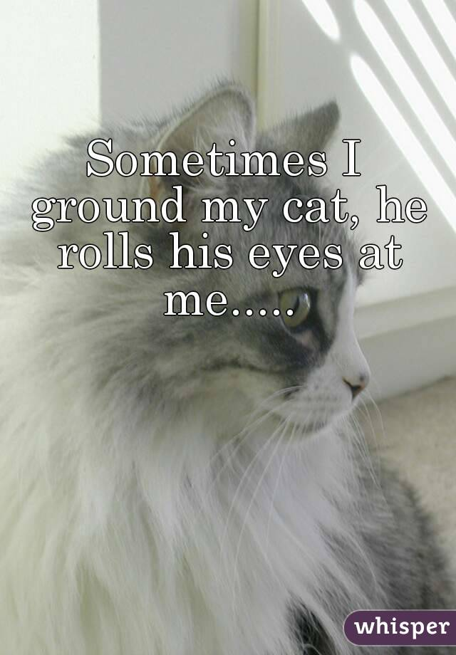 Sometimes I ground my cat, he rolls his eyes at me.....