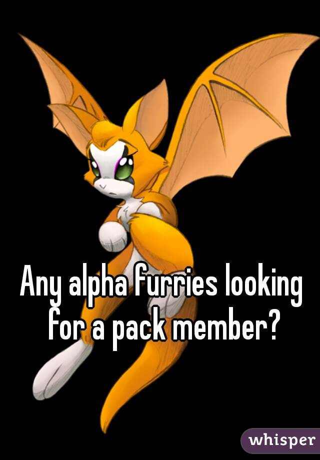 Any alpha furries looking for a pack member?