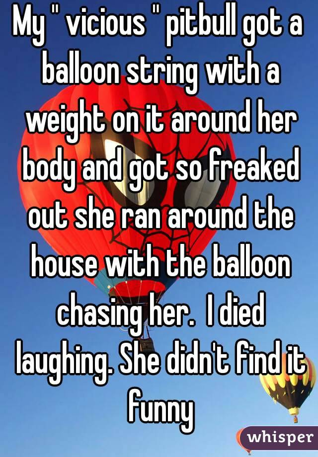 """My """" vicious """" pitbull got a balloon string with a weight on it around her body and got so freaked out she ran around the house with the balloon chasing her.  I died laughing. She didn't find it funny"""