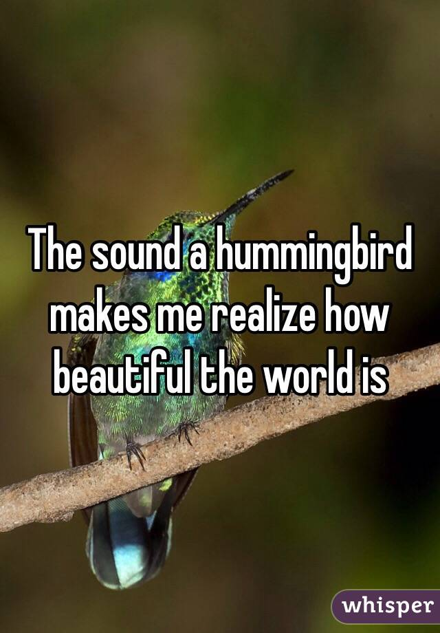 The sound a hummingbird makes me realize how beautiful the world is