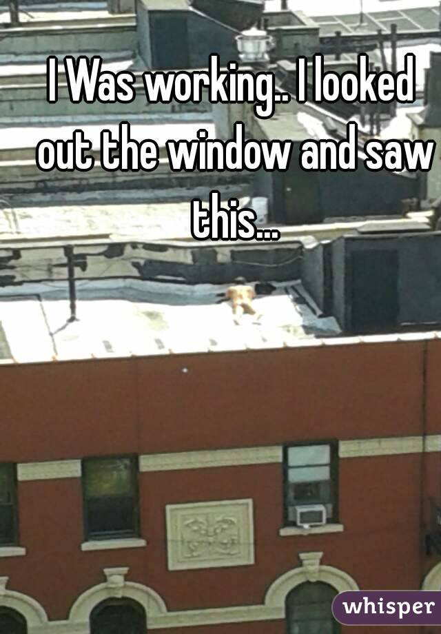 I Was working.. I looked out the window and saw this...