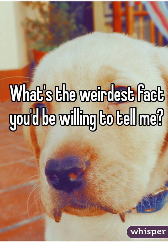 What's the weirdest fact you'd be willing to tell me?