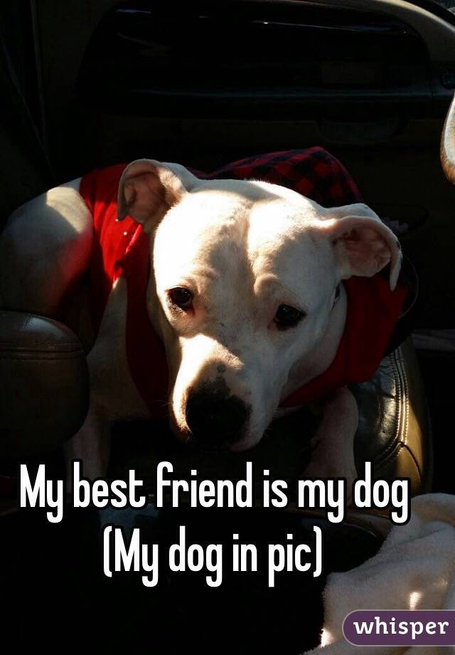My best friend is my dog (My dog in pic)