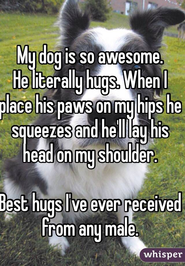My dog is so awesome.  He literally hugs. When I place his paws on my hips he squeezes and he'll lay his head on my shoulder.  Best hugs I've ever received from any male.
