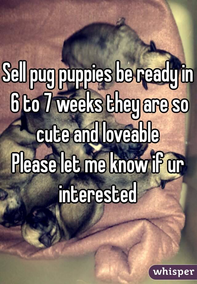 Sell pug puppies be ready in 6 to 7 weeks they are so cute and loveable  Please let me know if ur interested