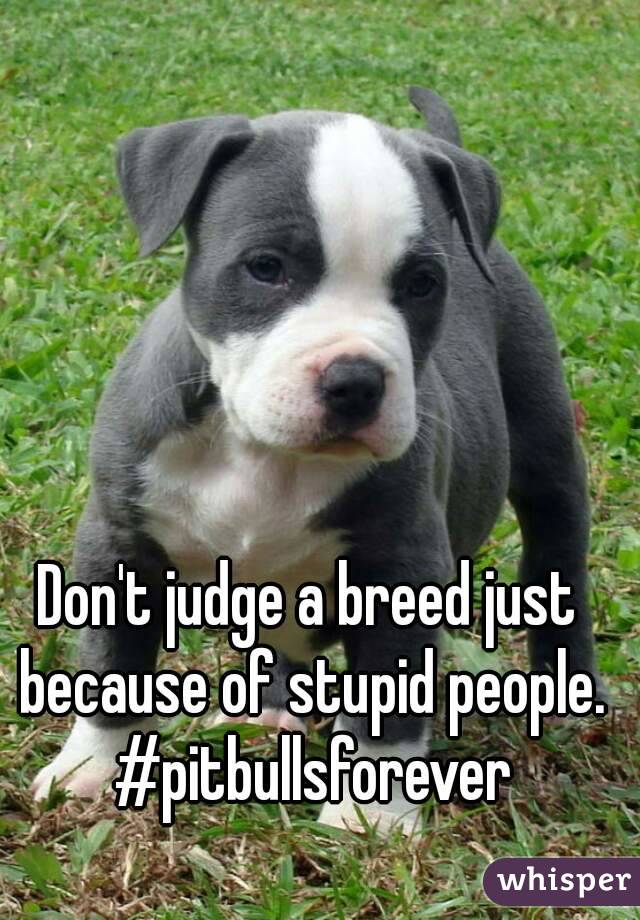 Don't judge a breed just because of stupid people. #pitbullsforever