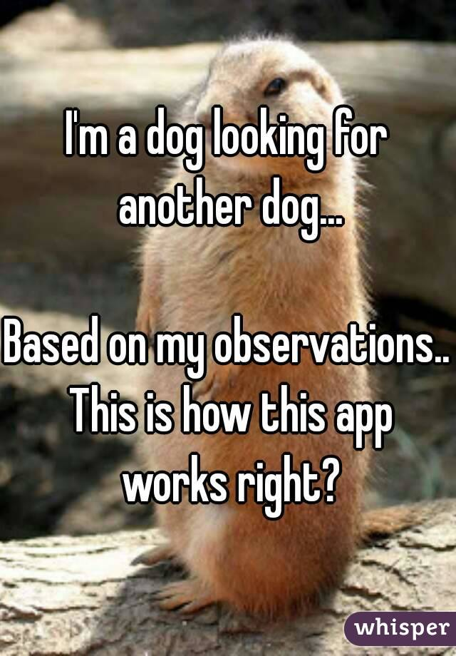 I'm a dog looking for another dog...  Based on my observations.. This is how this app works right?
