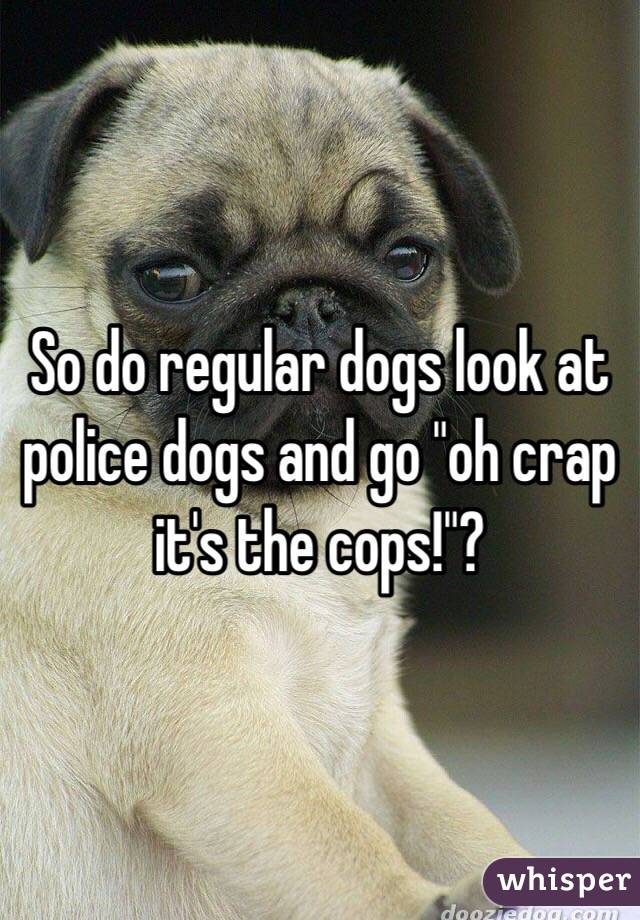 "So do regular dogs look at police dogs and go ""oh crap it's the ..."