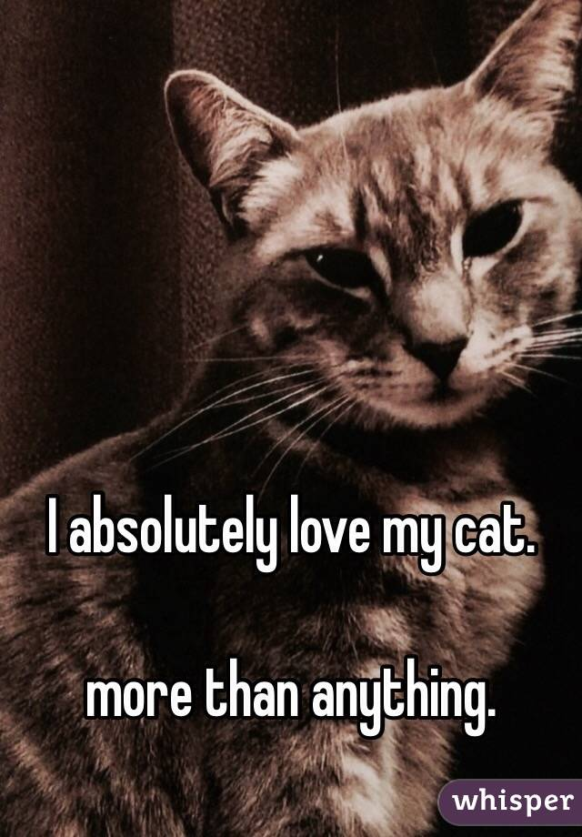 Love You More Than Anything Cat i Absolutely Love my Cat More