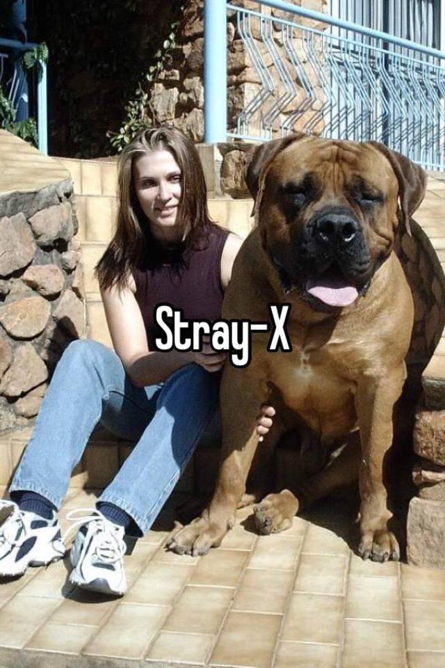 Stray-x