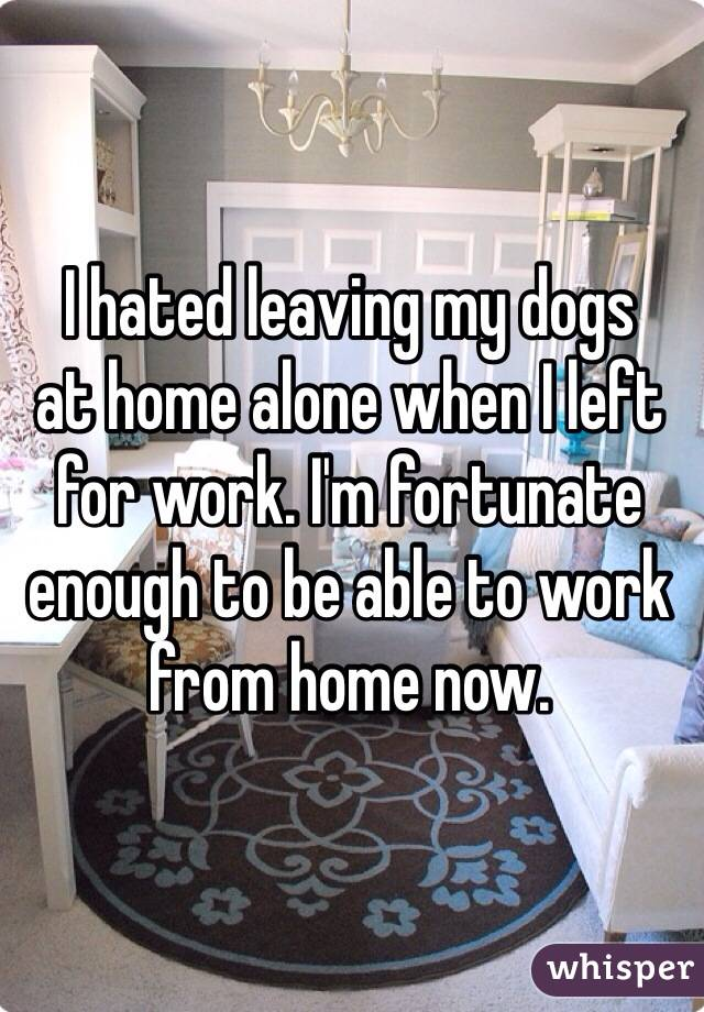 I hated leaving my dogs at home alone when I left for work ...