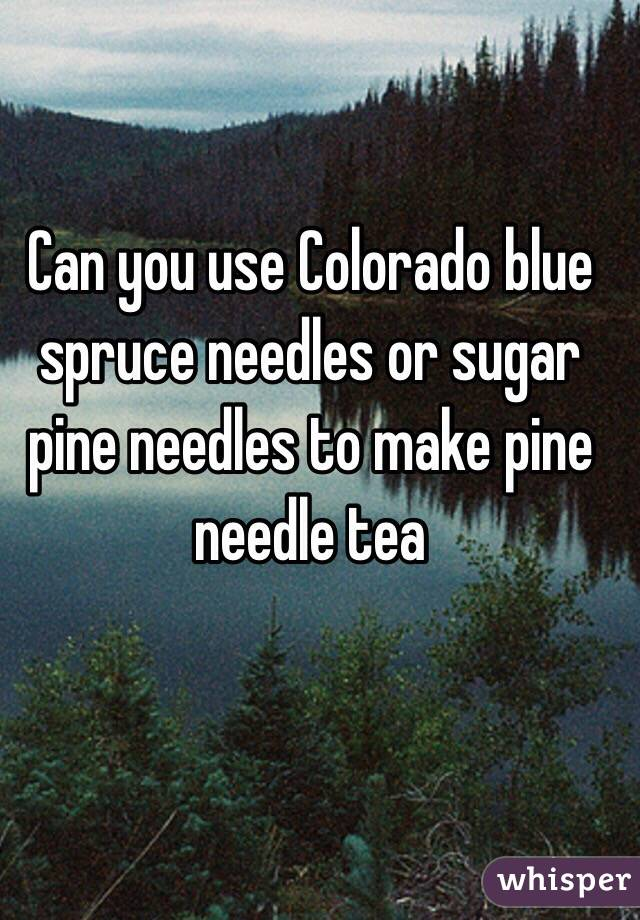Sugar Pine Needles