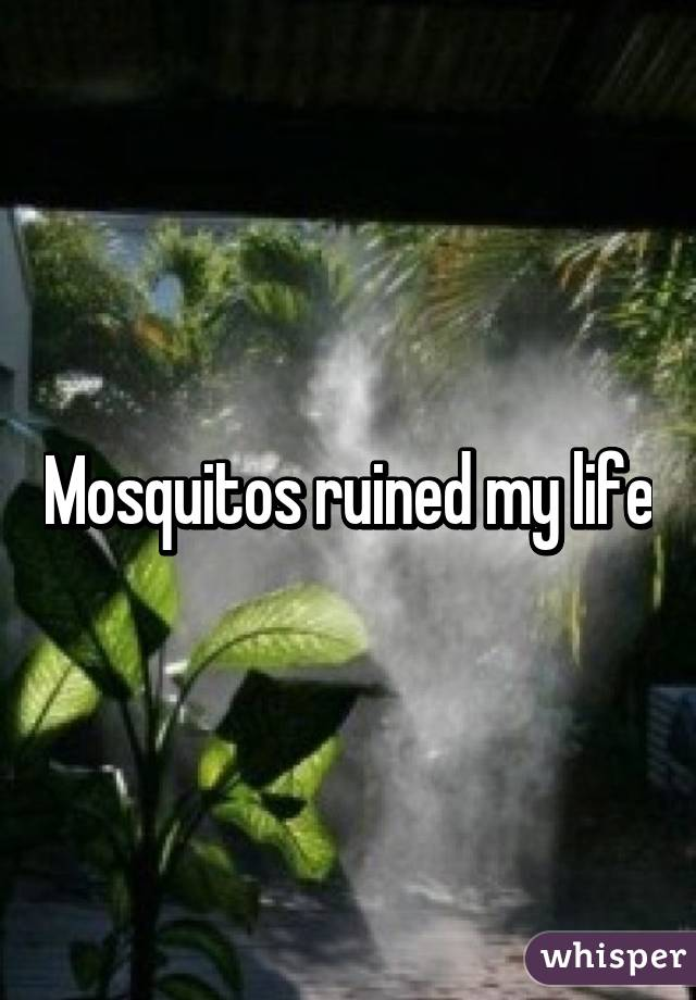 Mosquitos ruined my life