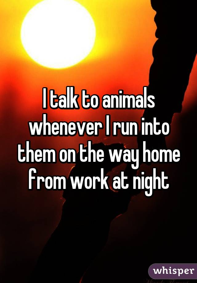 I talk to animals whenever I run into them on the way home from work at night