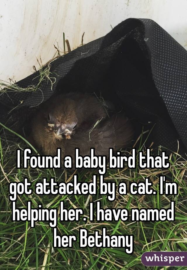 I found a baby bird that got attacked by a cat. I'm helping her. I have named her Bethany