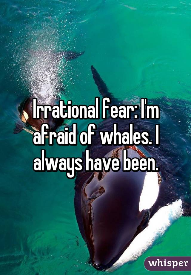 Irrational fear: I'm afraid of whales. I always have been.
