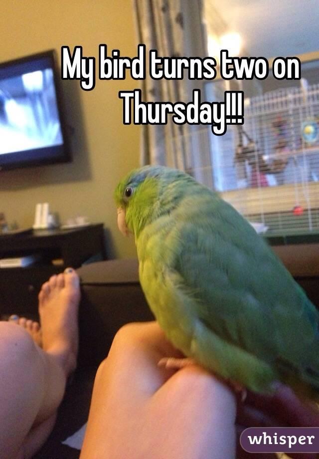 My bird turns two on Thursday!!!