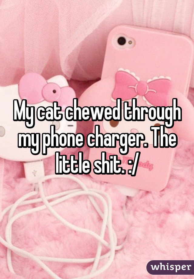 My cat chewed through my phone charger. The little shit. :/