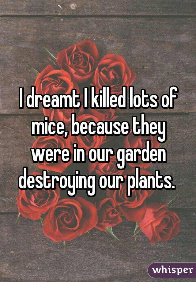 I dreamt I killed lots of mice, because they were in our garden destroying our plants.